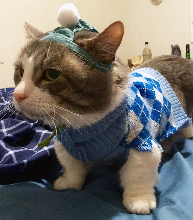 Cats Wearing Sweaters