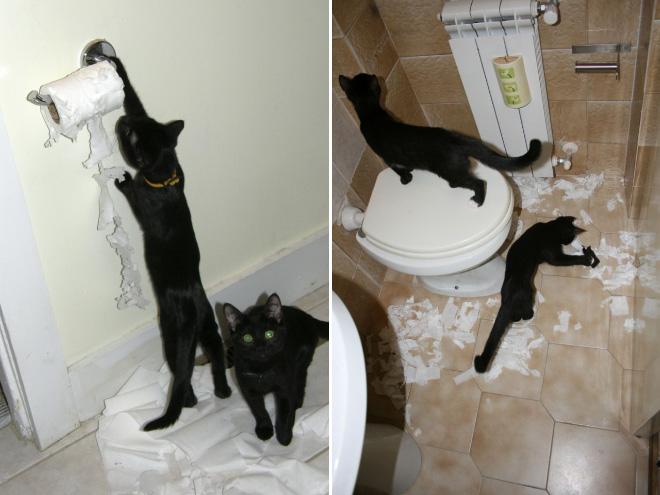 Cats Vs Toilet Paper The Eternal Battle
