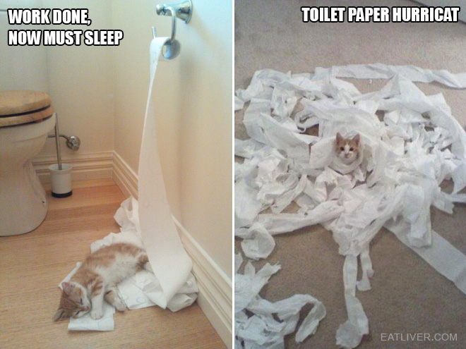 Should Cats Eat Paper
