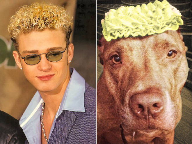 25 Celebrities And Their Ultimate Dog Look Alikes!