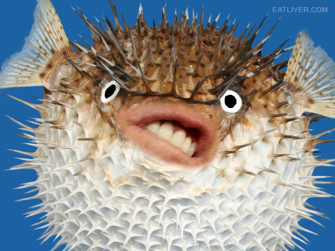 puffer fish with donald trump s mouth