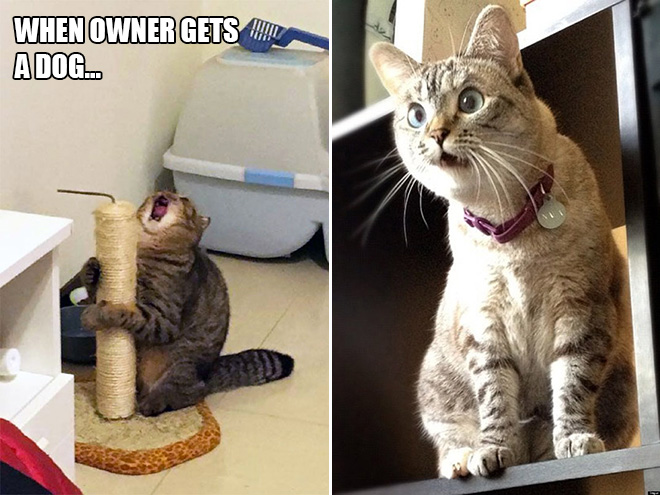 Cats Are Such Drama Queens