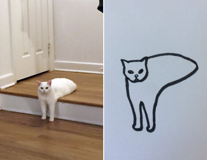Ultra Realistic Drawings Of Cats