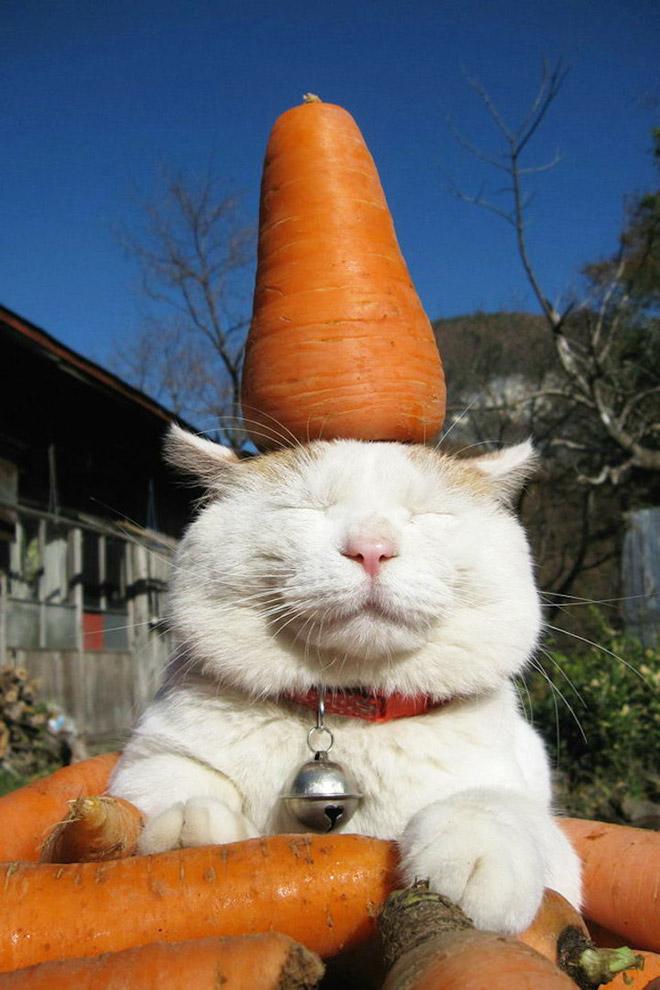 Cats Like Carrots