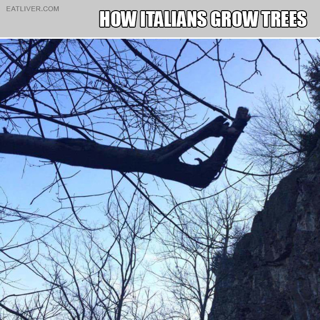 This is how Italians grow trees.