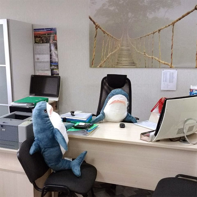 Business sharks.