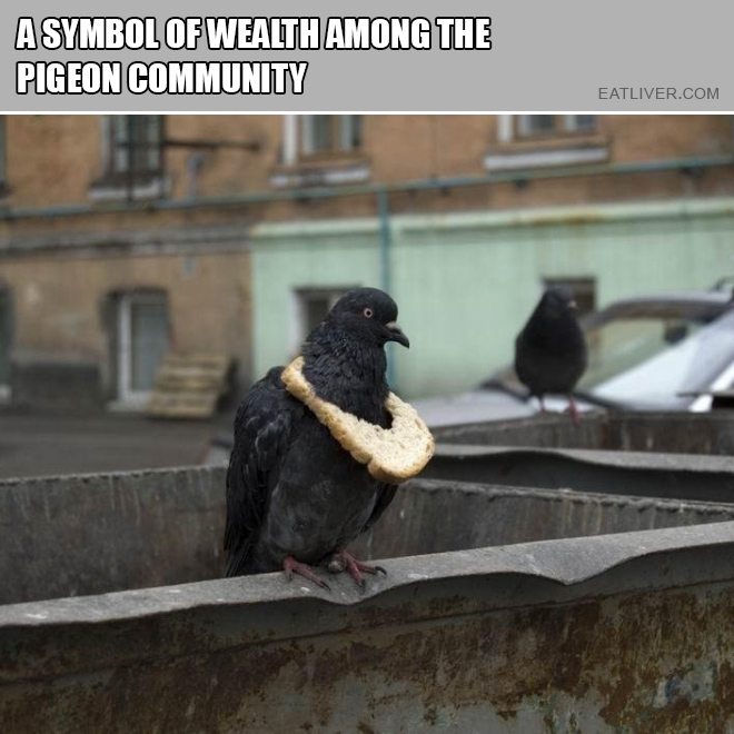 A symbol of wealth among the pigeon community.