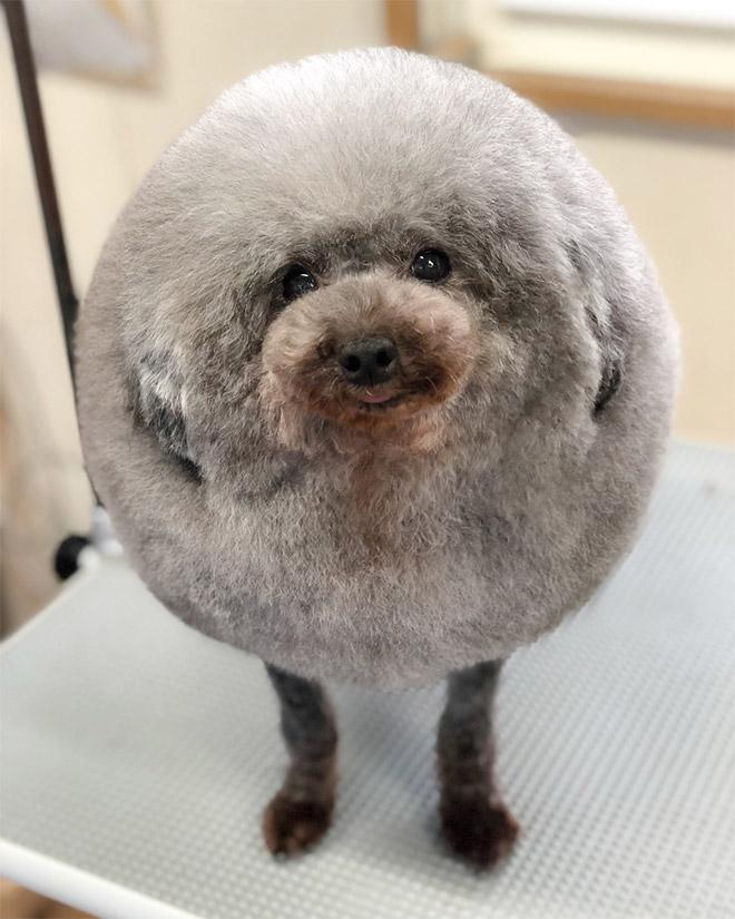 Самая круглая собака в мире.