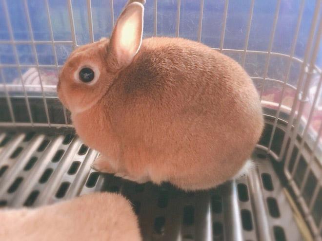 Милый круглый кролик.