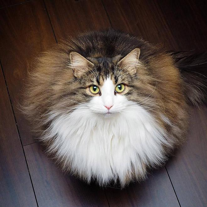 Забавный круглый кот.