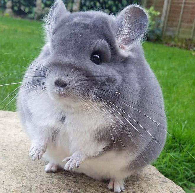 Забавная круглая мышь.