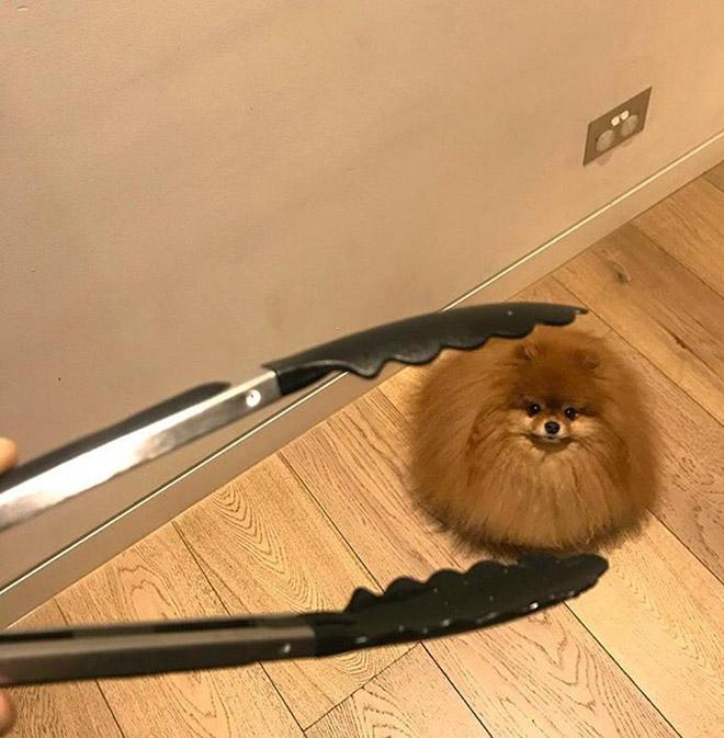 Смешная круглая собака.