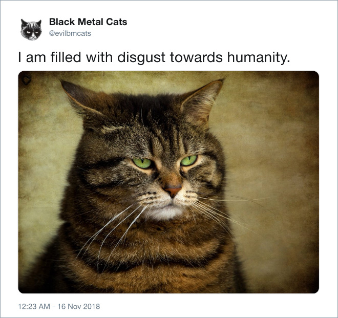 Heavy metal cat is disgusted with humanity.