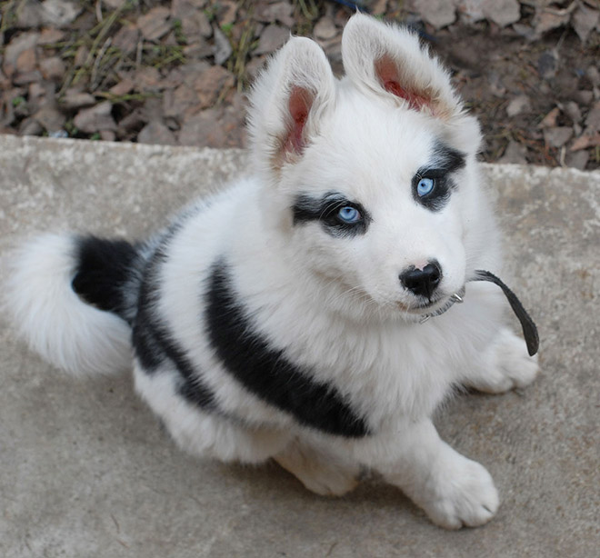 Metalhead puppy.