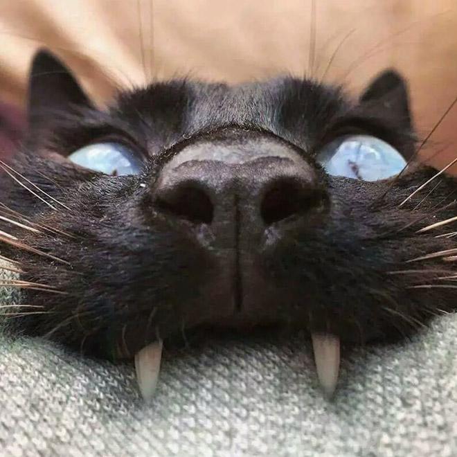 Metalhead cat.