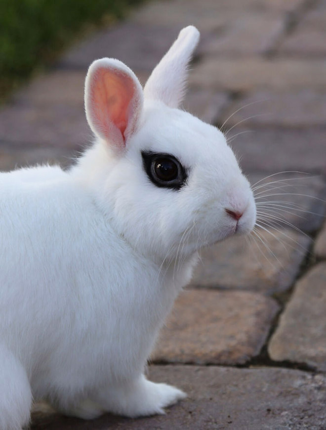Metalhead rabbit.