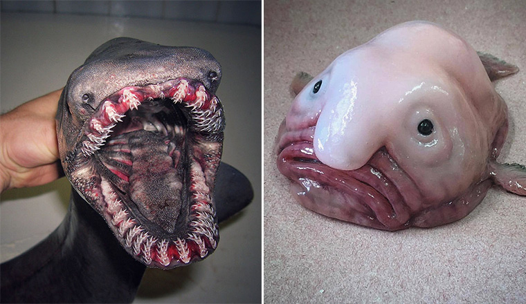 Russian Fisherman Shares Funny And Terrifying Creatures of The Deep Sea
