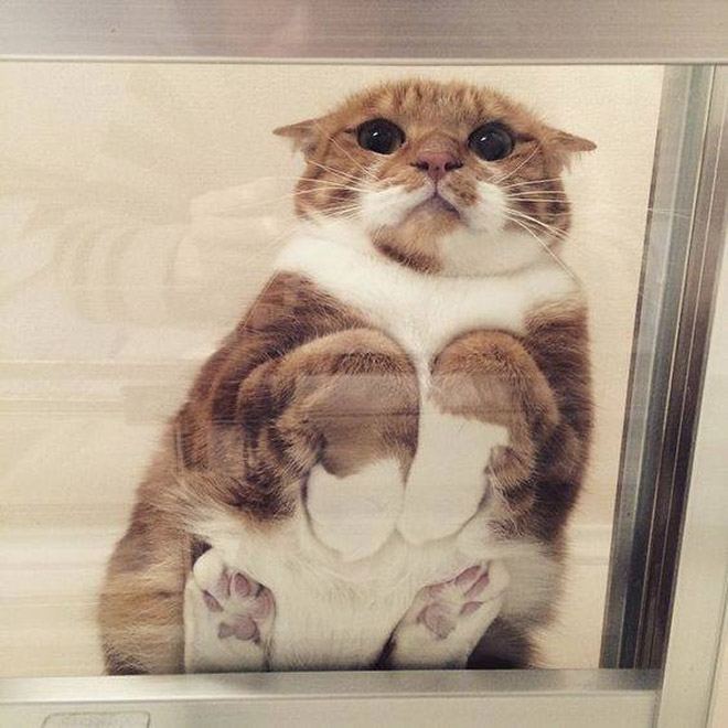 Cute cat sleeping on a glass table.