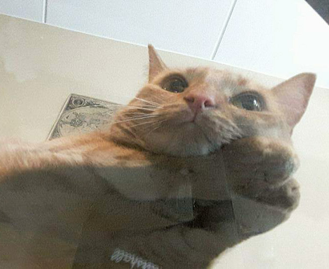 Cute cat laying on a glass table.