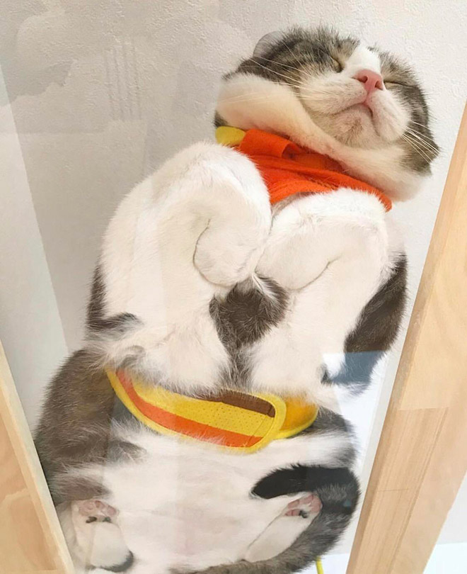 Adorable cat sleeping on a glass table.