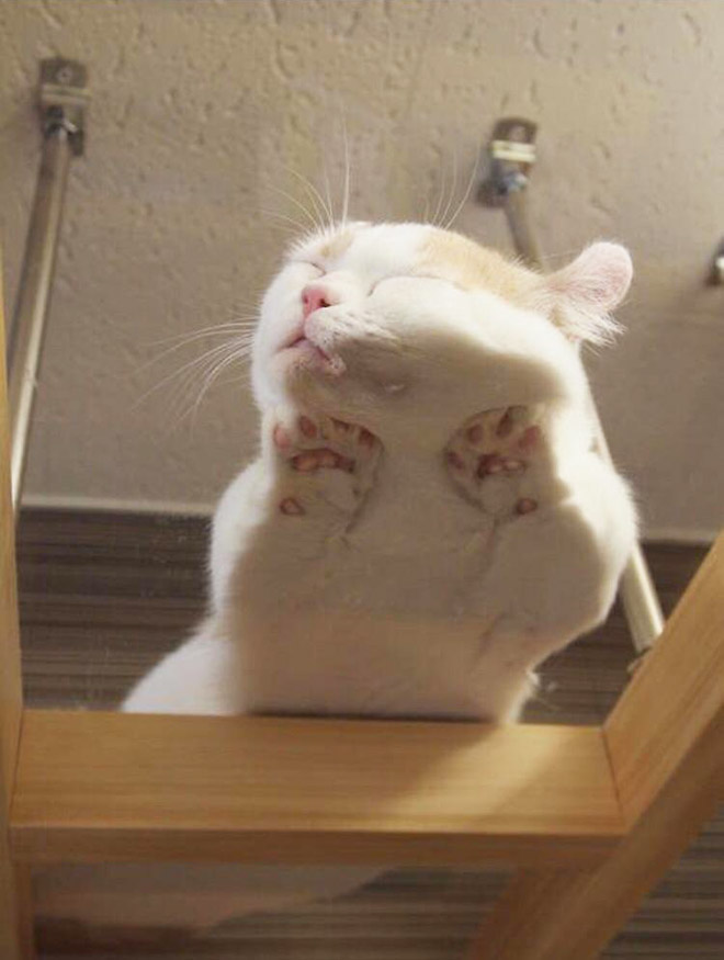 Funny cat sleeping on a glass table.
