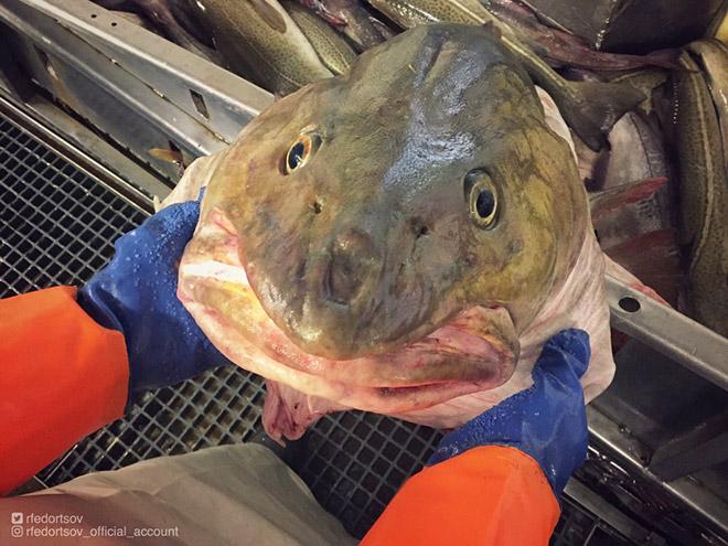 Смешная глубоководная рыба.