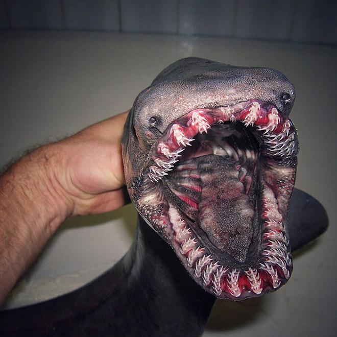 Страшная глубоководная рыба.