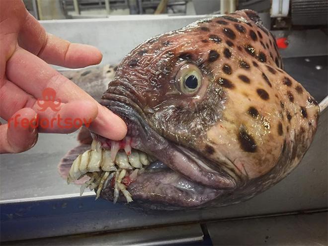 Неуклюжая глубоководная рыба.