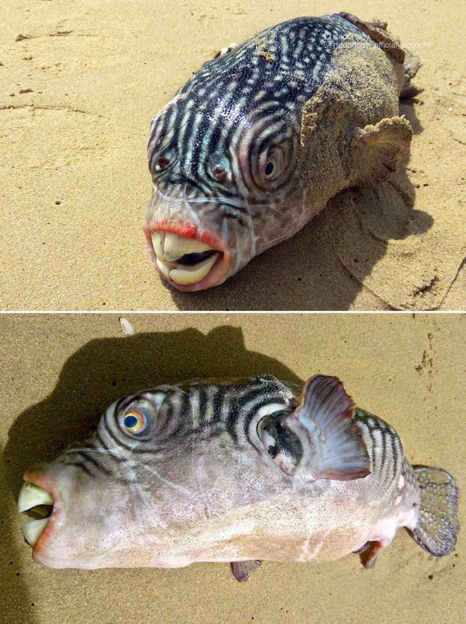 Забавная рыба с огромными зубами.
