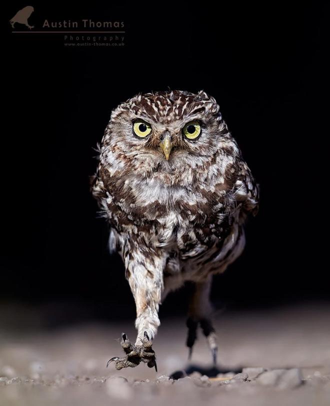Эта сова определенно злится на что-то.