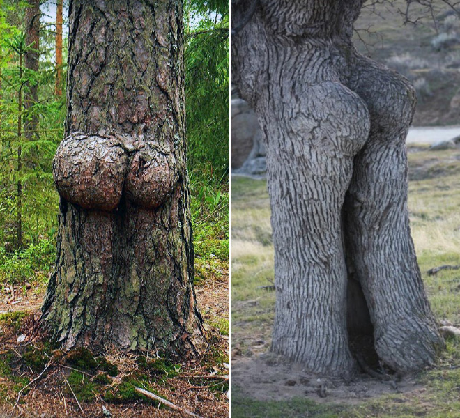 The funniest trees ever.