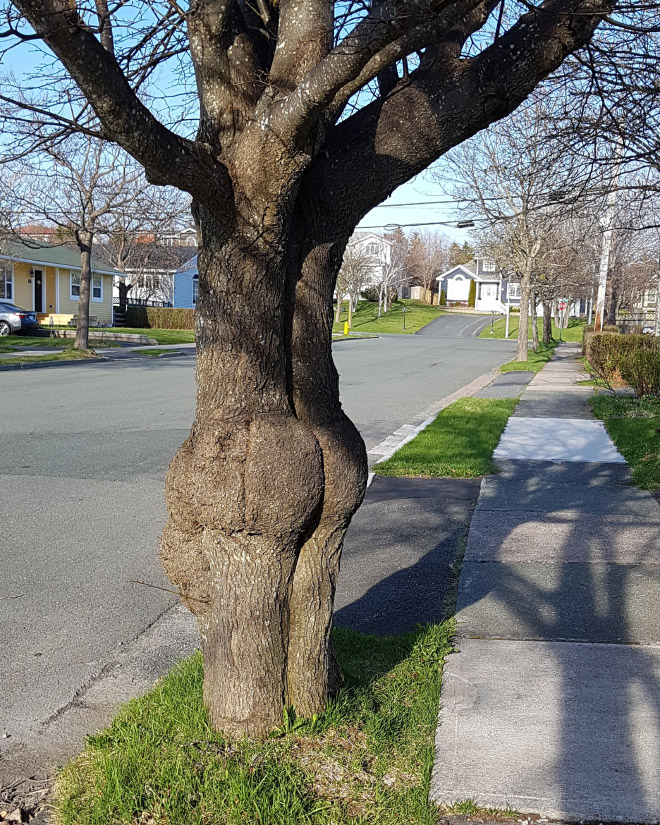 The funniest tree in whole town.