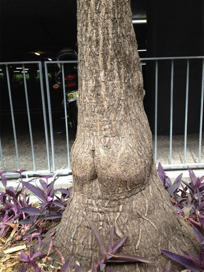 This tree is mooning you.