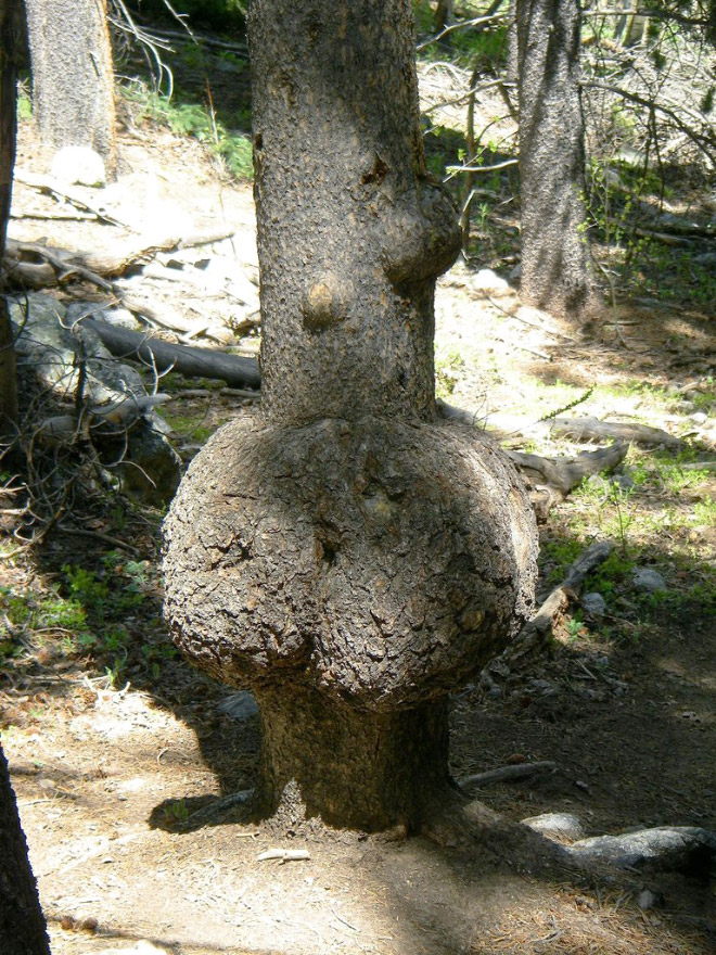 This tree is mooning you. What are you gonna do about it?