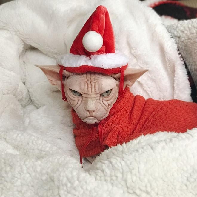 He hates Christmas.