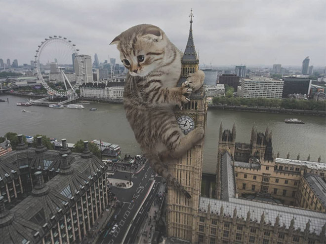 Huge kitten vs. London.