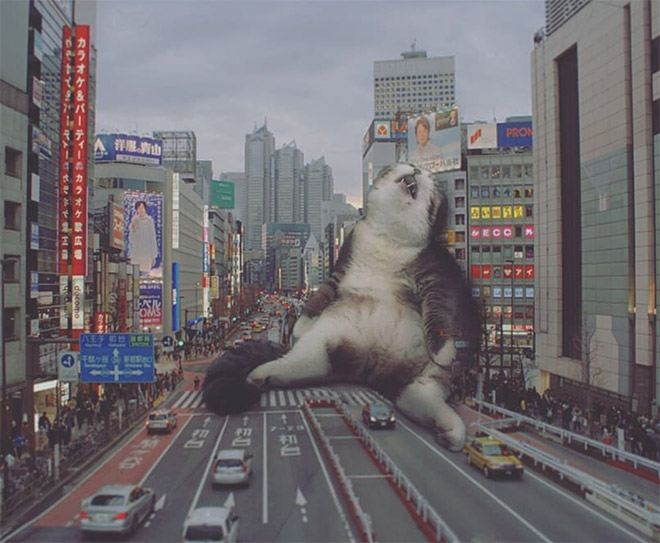 If giant cats lived in the city...