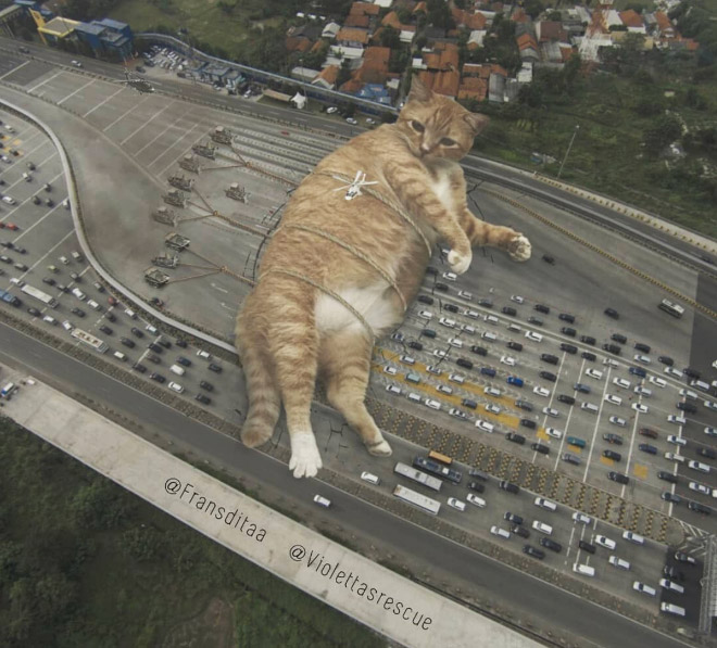 Huge cat blocking the traffic.
