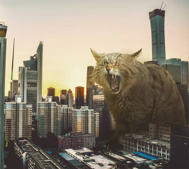 If giant cats invaded the city...