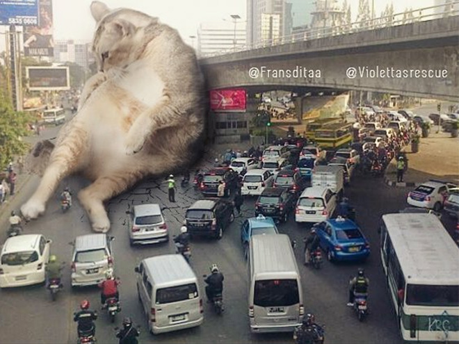 If huge cats lived among us...