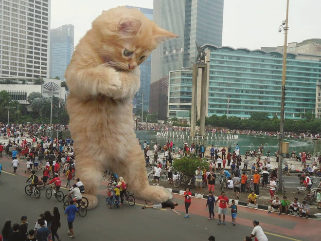 What if huge kittens lived among us?