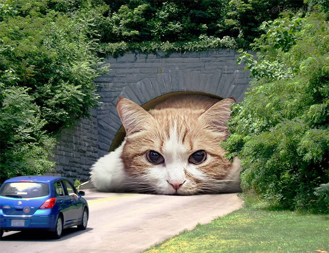 Giant cat blocking the traffic.