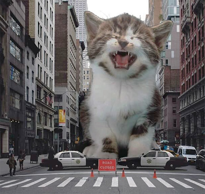 Huge kitten attacks the city.