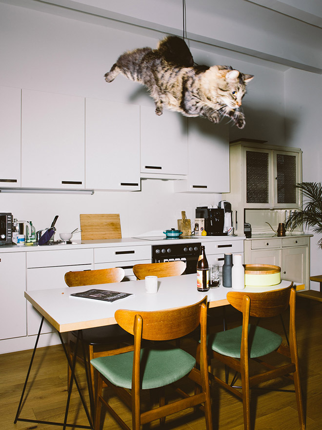 Cat being abducted by aliens from the kitchen.