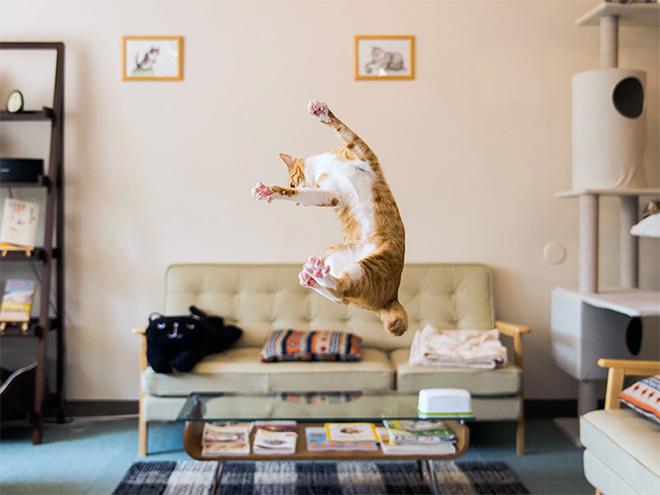 Похищение кота инопланетянином в действии.