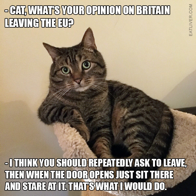 Cat giving advice on Brexit.