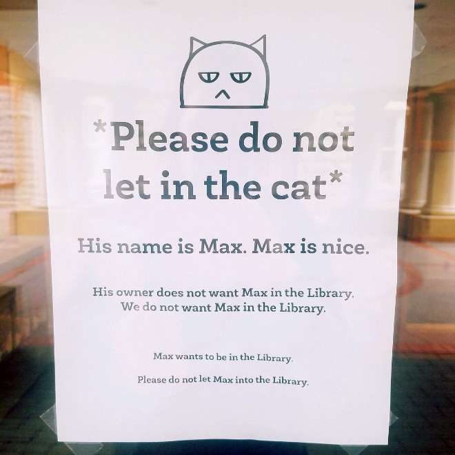 Cat vs. library.