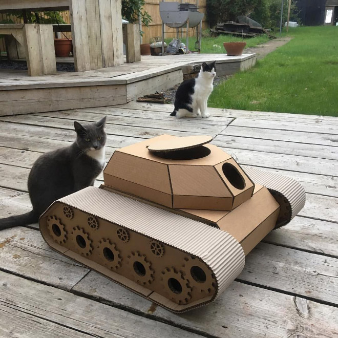 Cat standing near his tank.