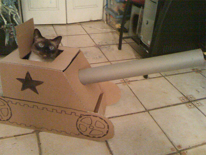 Cat in a soviet army tank.