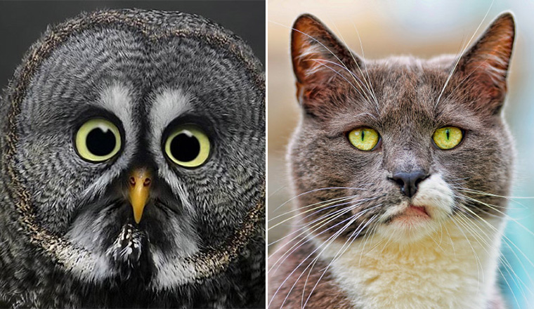 Animals Silently Judging Your Poor Life Decisions